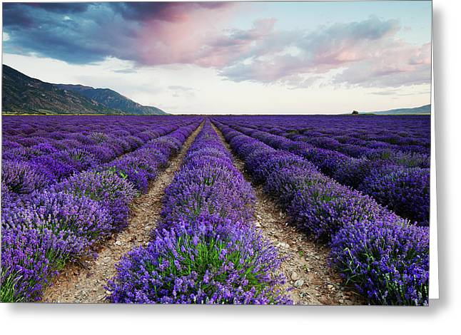 Greeting Card featuring the photograph Lavender Field by Nicole Young