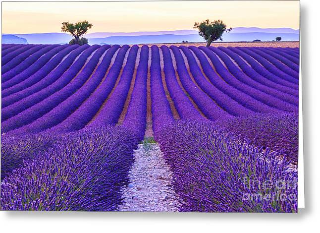 Lavender Field Summer Sunset Landscape Greeting Card