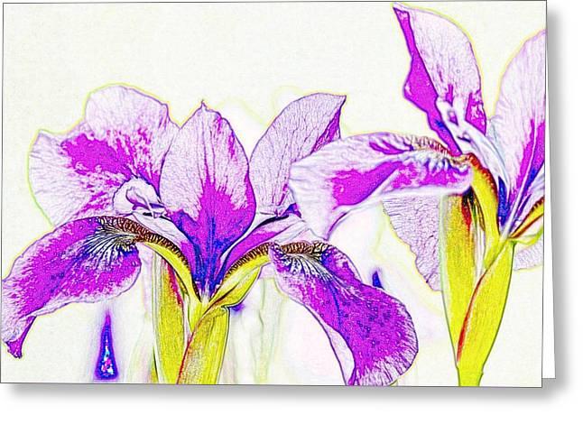 Lavender Irises Greeting Card