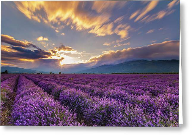 Lavender Sun Greeting Card
