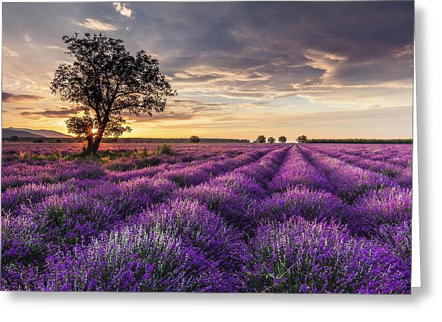 Lavender Sunrise Greeting Card