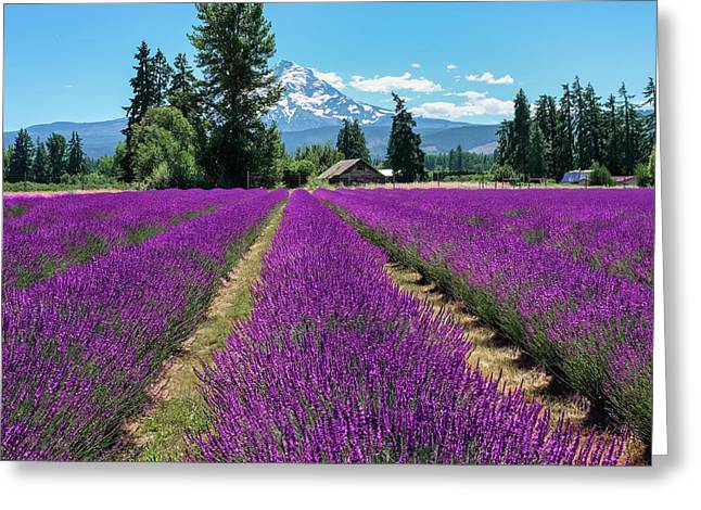 Greeting Card featuring the photograph Lavender Valley Farm by Robert Bellomy