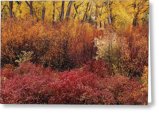 Layers Of Color Greeting Card by Leland D Howard