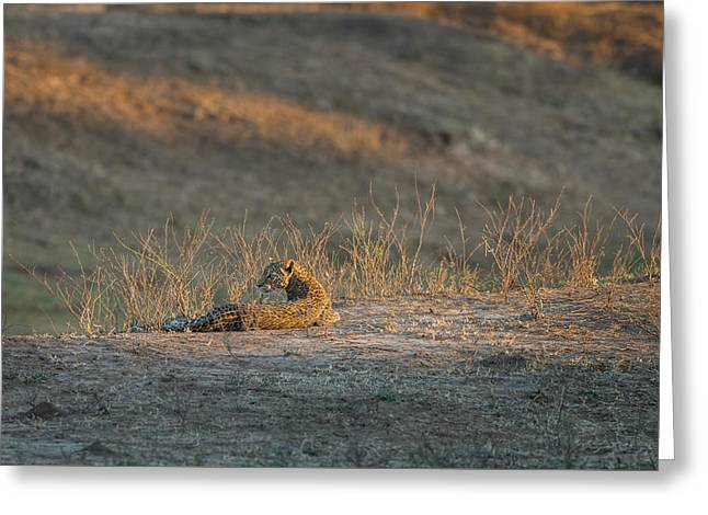 Greeting Card featuring the photograph Lc10 by Joshua Able's Wildlife