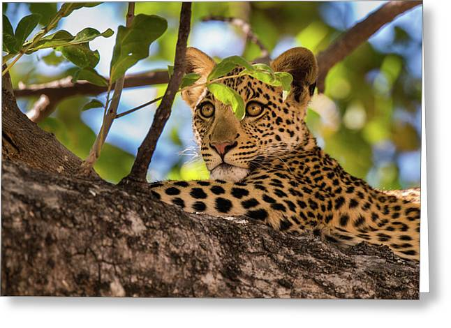 Greeting Card featuring the photograph Lc11 by Joshua Able's Wildlife