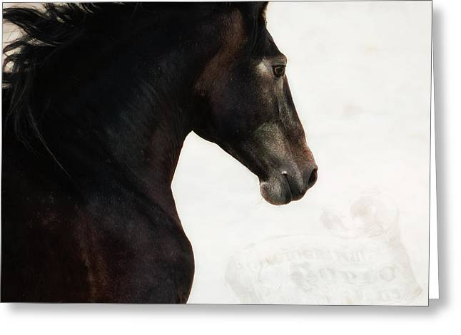Le Cheval Greeting Card