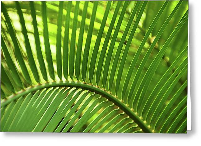 Greeting Card featuring the photograph Leaf Abstraction I by Leda Robertson