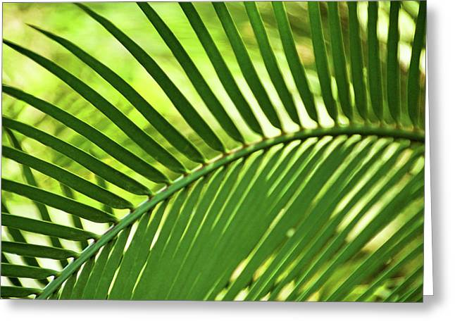 Greeting Card featuring the photograph Leaf Abstraction Iv by Leda Robertson