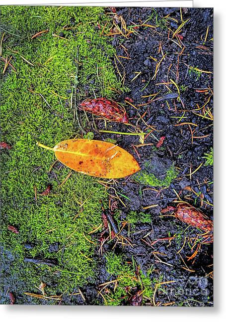 Greeting Card featuring the photograph Leaf And Mossy by Jon Burch Photography