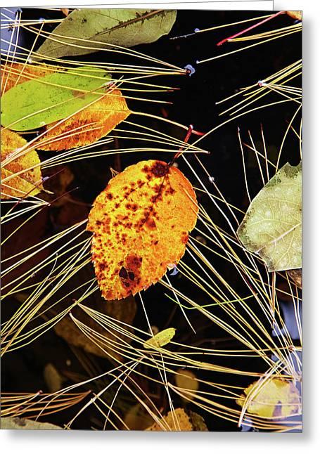 Leaf In Pond Greeting Card