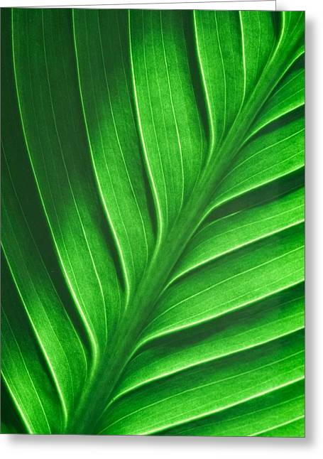 Leaf Pattern Greeting Card