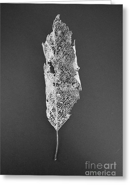 Greeting Card featuring the photograph Leaf Skeleton Red Filter by Jeni Gray