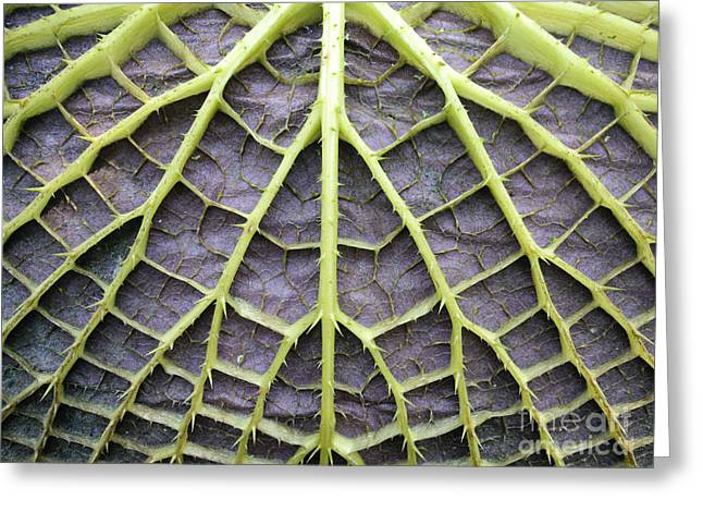 Leaf Underside With Stable Construction Greeting Card