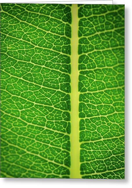 Leafy Detail Greeting Card