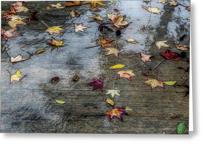 Leaves In The Rain Greeting Card