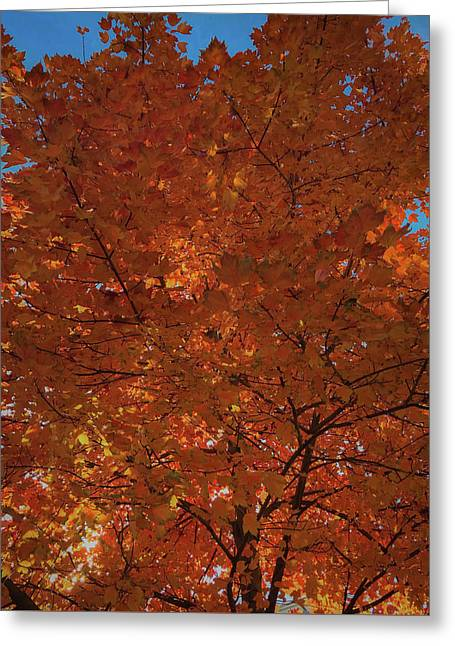 Leaves Of Fire Greeting Card