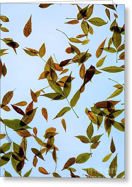Greeting Card featuring the photograph Leaves On Glass by Jon Burch Photography