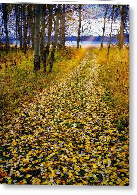 Leaves On Trail Greeting Card