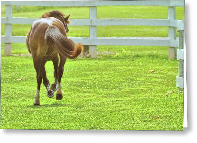 Let 'er Buck  Greeting Card by JAMART Photography