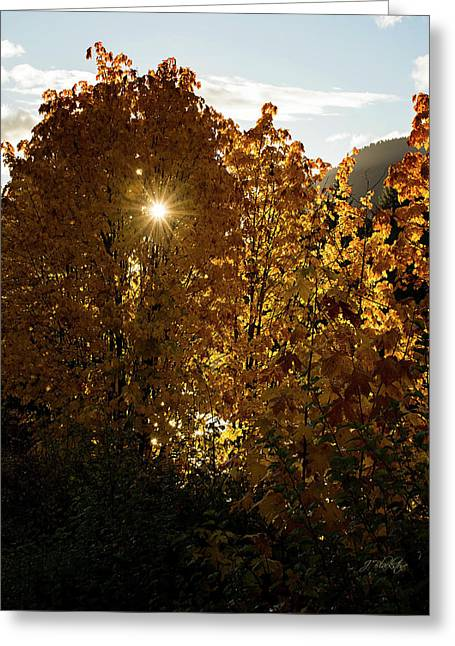 Greeting Card featuring the photograph Letting Go - Autumn Art by Jordan Blackstone