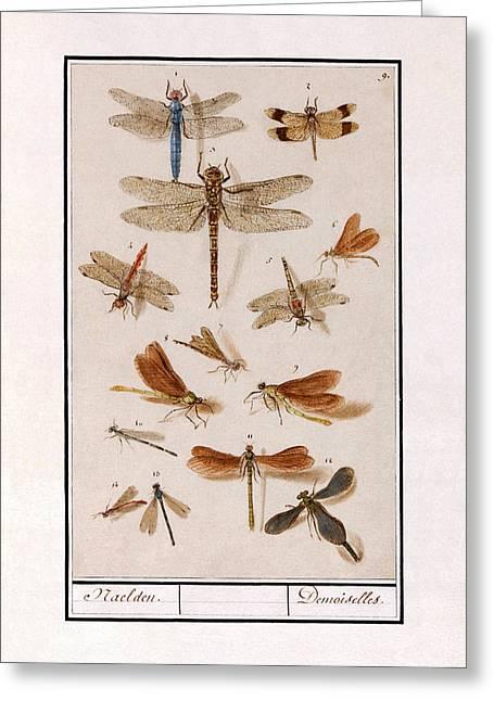 Libellen Greeting Card