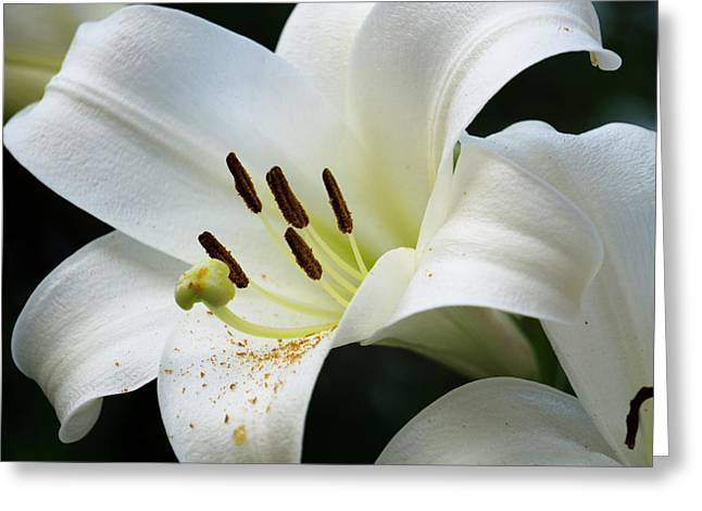 Lily_634_18 Greeting Card