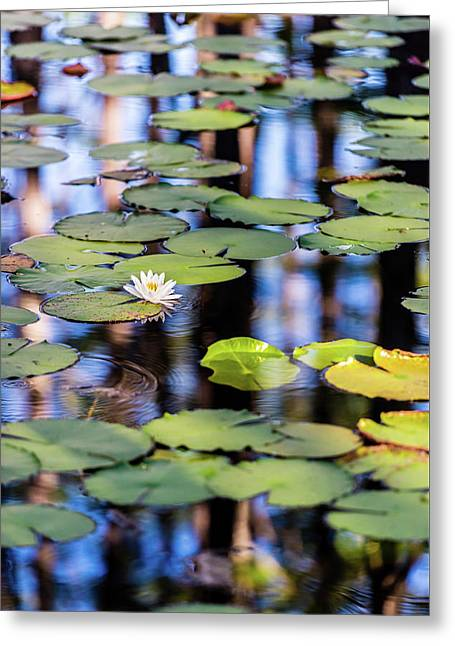 Lilypad Cypress Pond Greeting Card