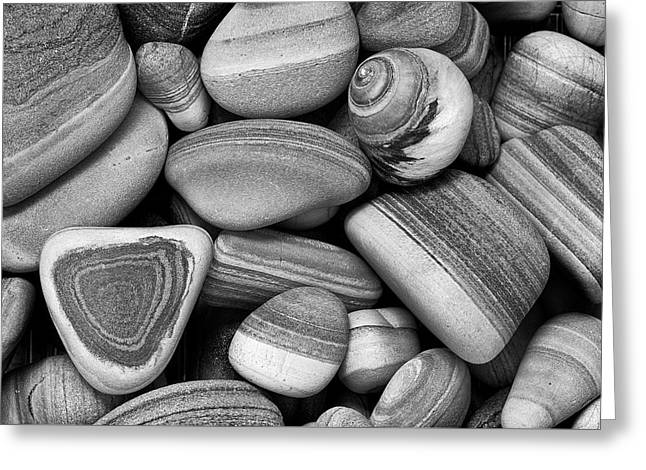 Lined Rocks And Shell Greeting Card