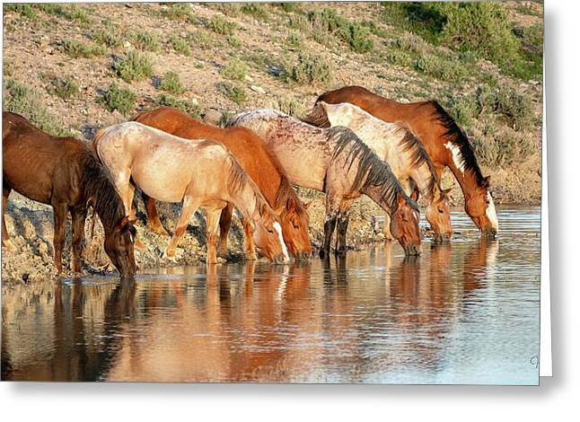 Lineup At The Pond-- Wild Horses Greeting Card