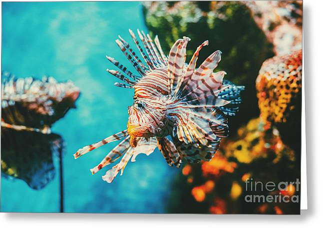 Lion Fish Hunting Among Coral Reefs Greeting Card