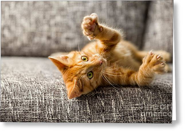 Little Cat Playing On The Bed Greeting Card