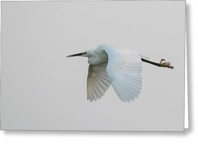 Little Egret Evening Flght Greeting Card
