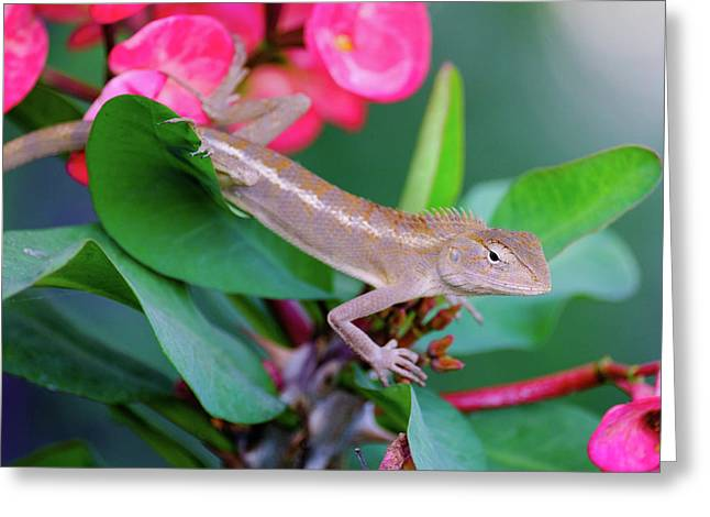 Greeting Card featuring the photograph Little Lizard by Nicole Young