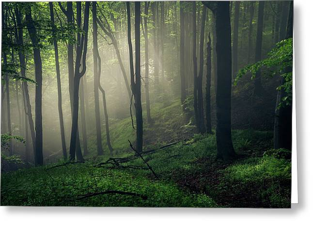 Living Forest Greeting Card