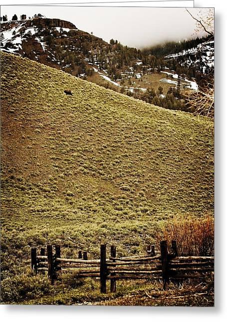 Lone Bison Greeting Card