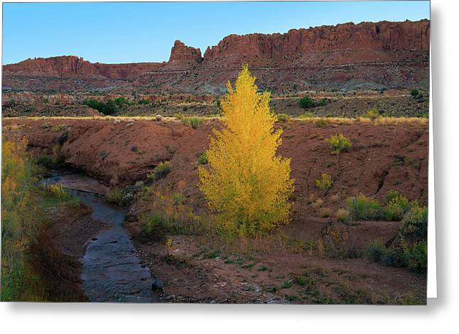 Lone Cottonwood Greeting Card
