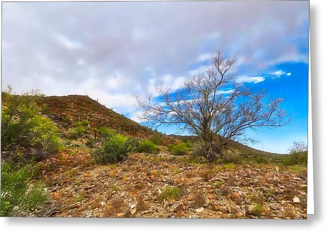 Lone Palo Verde Greeting Card