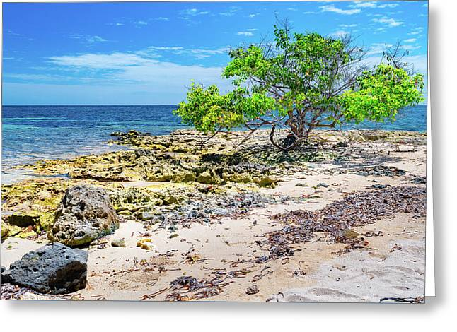 Lone Shore Tree Greeting Card