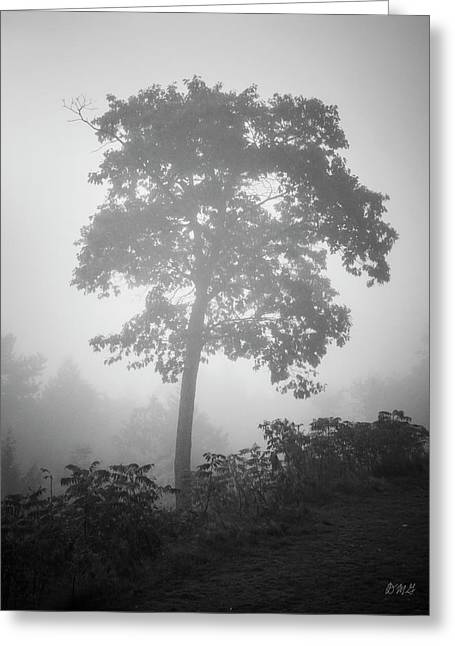 Greeting Card featuring the photograph Lone Tree And Fog Bw by David Gordon