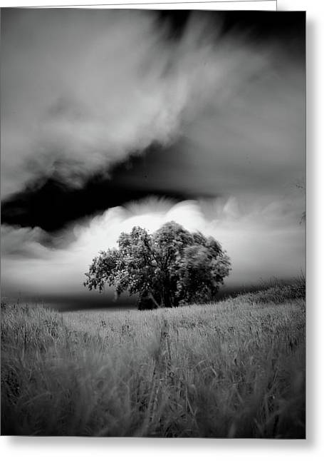 Lone Tree On A Hill Greeting Card