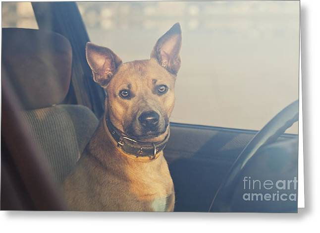 Lonely Dog Waiting In The Car Greeting Card