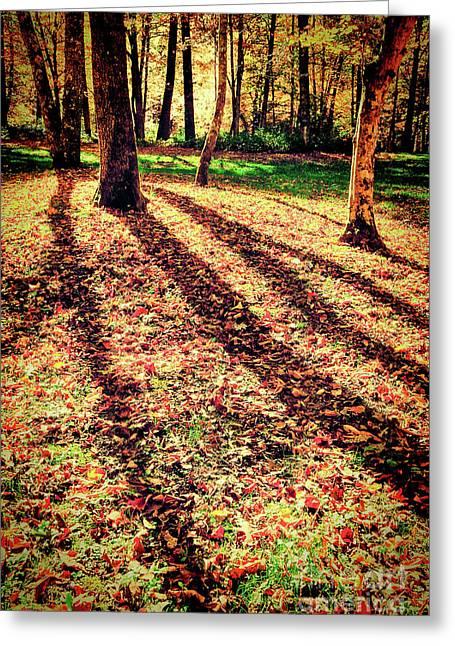 Long Autumn Shadows In The Blue Ridge Greeting Card by Dan Carmichael