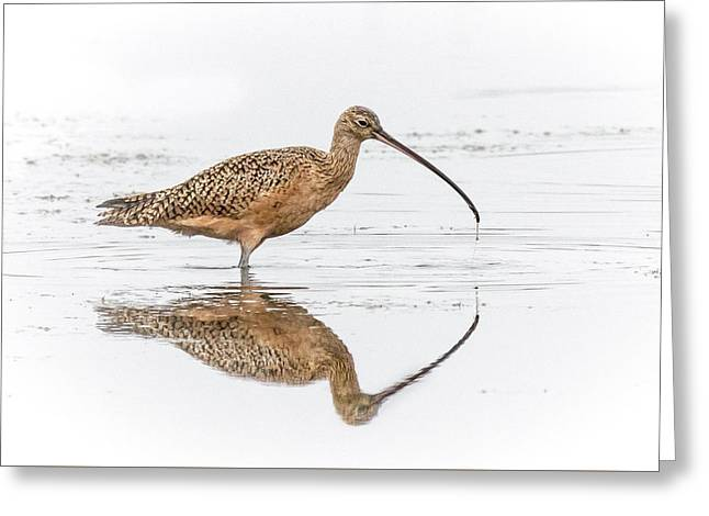 Long-billed Curlew Greeting Card