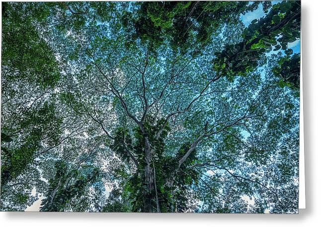 Looking Up Into The Canopy Of Trees Greeting Card
