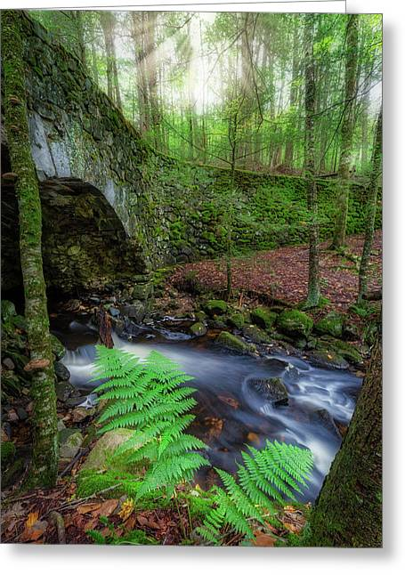 Greeting Card featuring the photograph Lost Bridge by Bill Wakeley