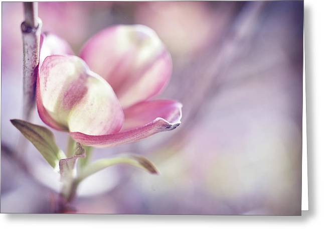 Greeting Card featuring the photograph Love Simply by Michelle Wermuth