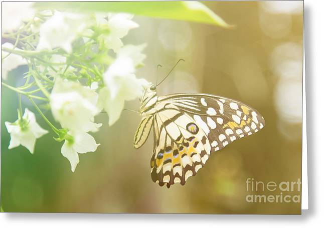Lovely Butterfly On White Flowers With Greeting Card