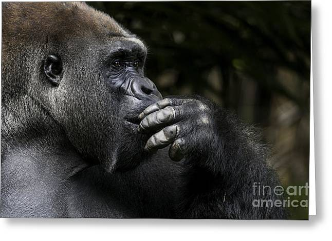 Lowland Gorilla On The Epic Pose Of Greeting Card