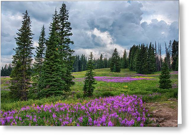 Lupine Filled Meadow In The Colorado Rockies. Greeting Card