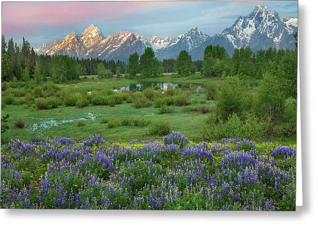 Lupine In Meadow, Grand Teton National Greeting Card